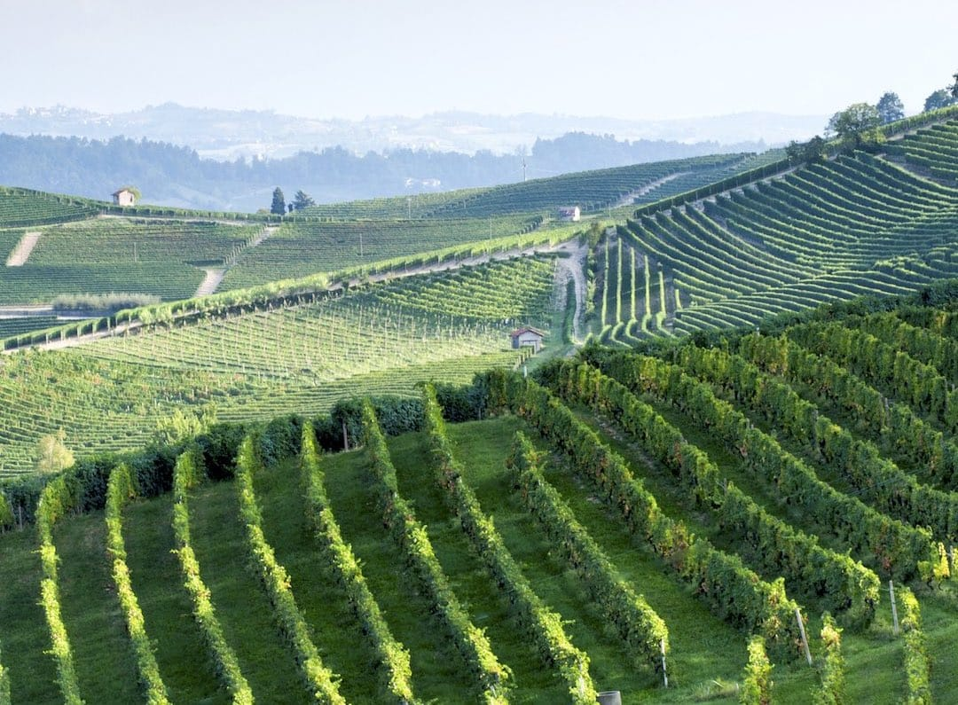 Barolo vineyards, Piedmont, Italy