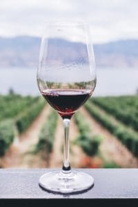 Wine glass with vineyard in the background
