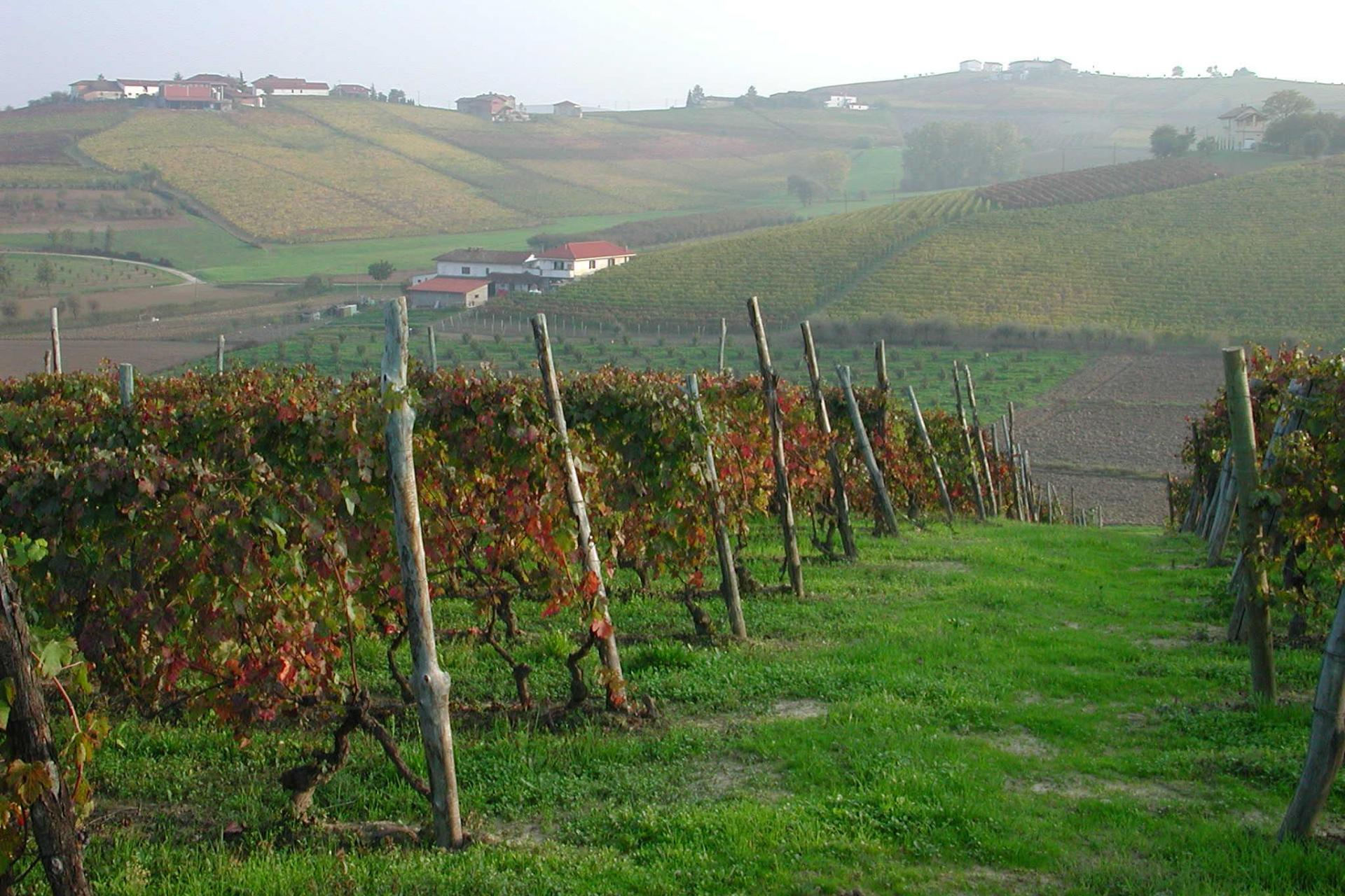 Italy Piedmont Wine Country cycling tour