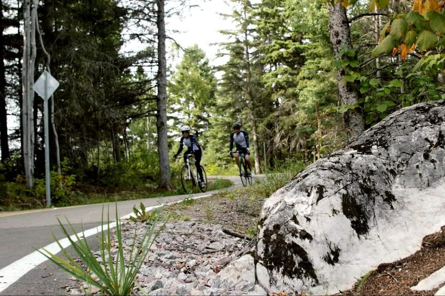 Beautiful forest on this bike tour through Quebec's blueberry route