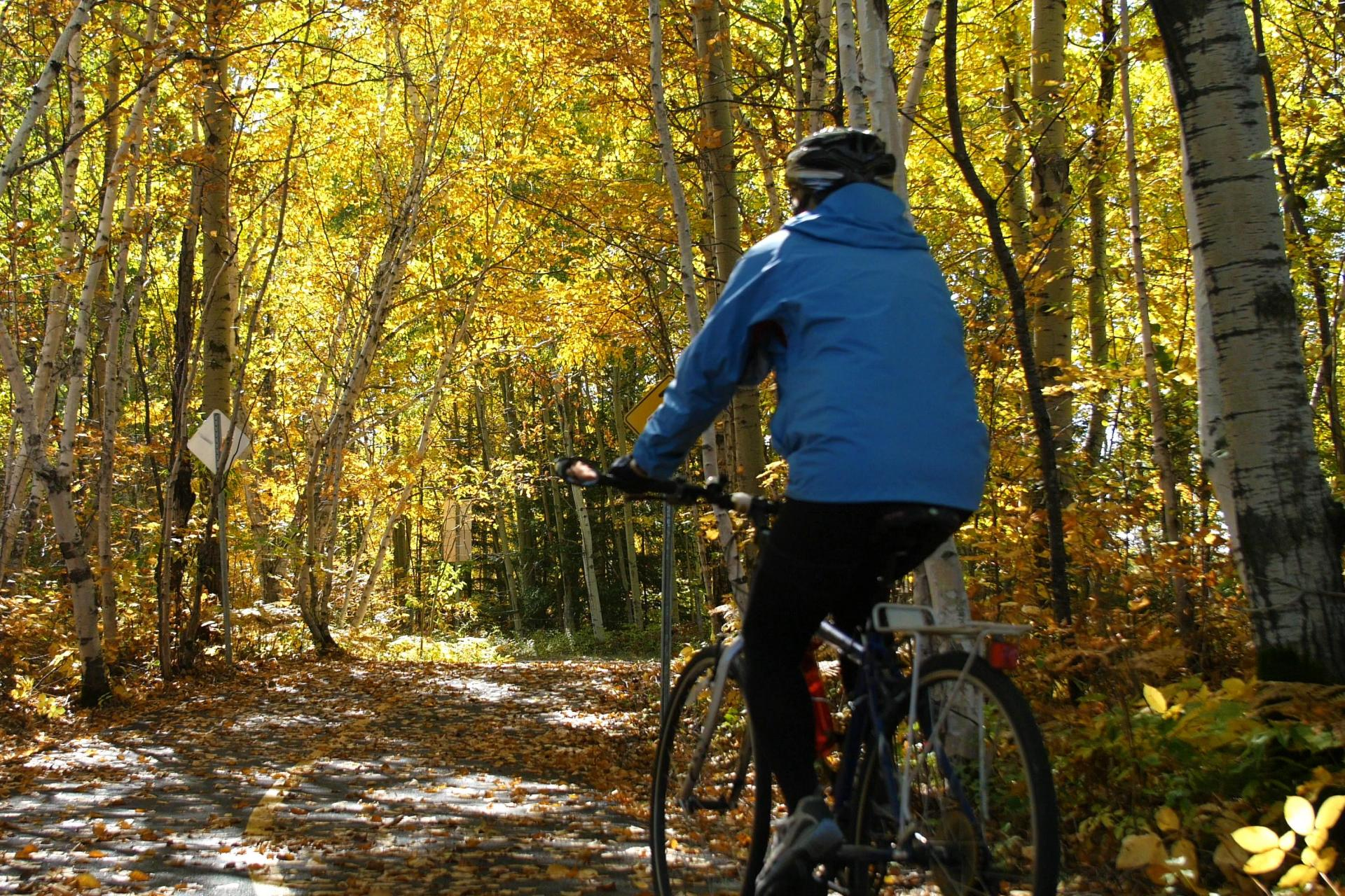 Dreamy fall colors on this bike tour through Quebec's blueberry route