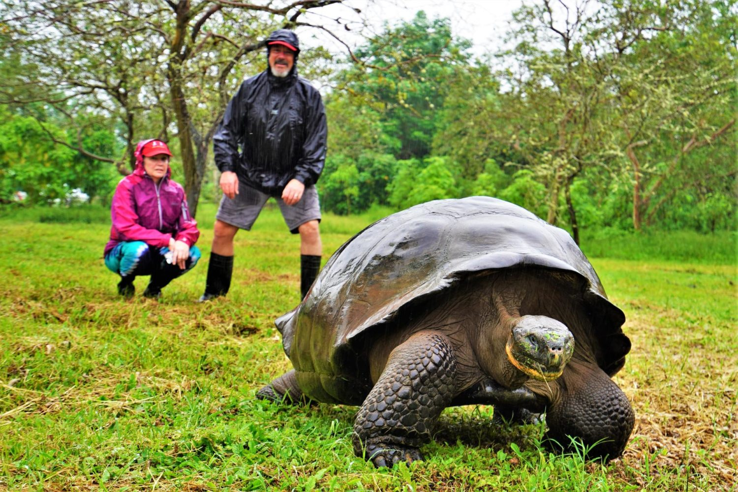 A man watching a Galapagos tortoise