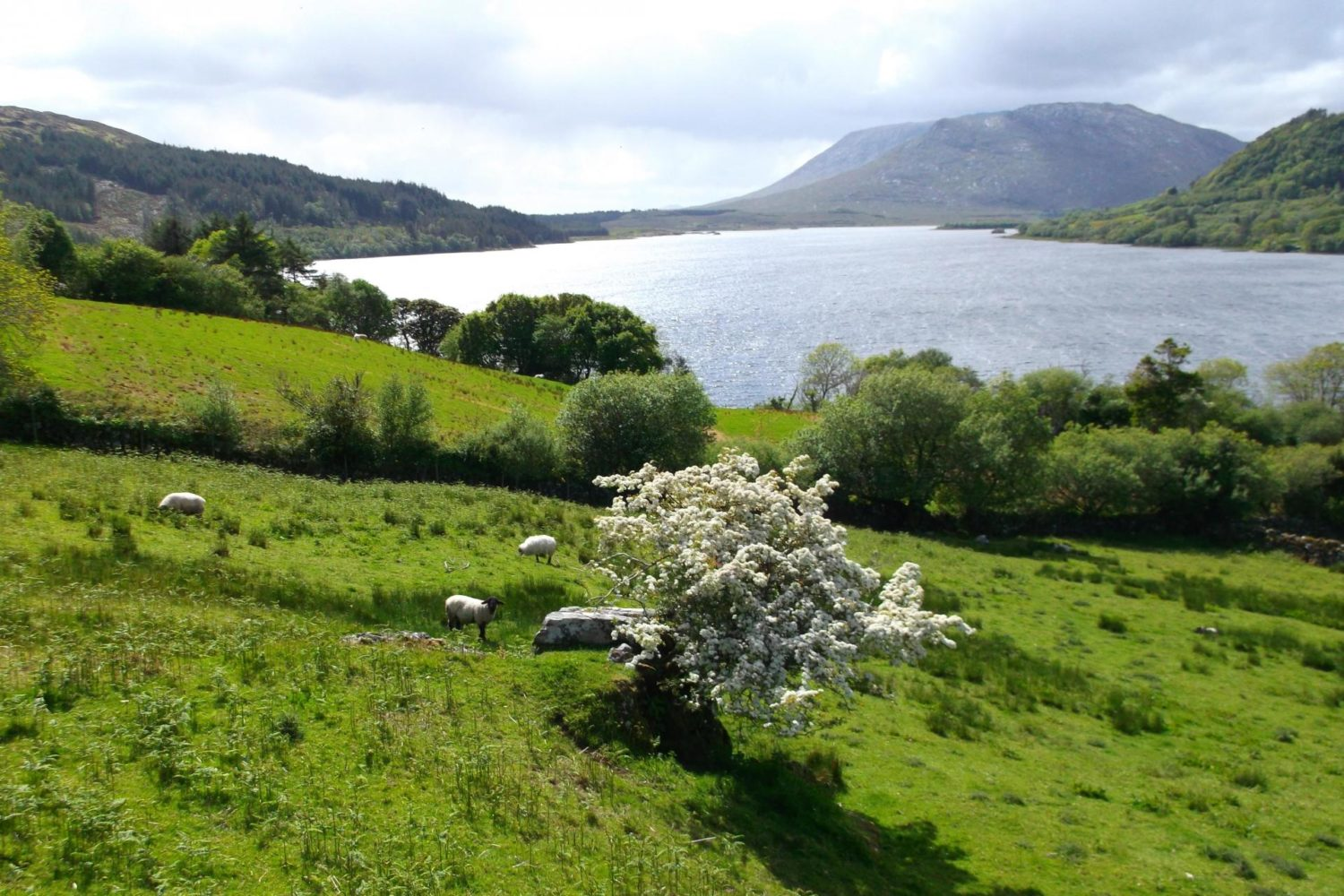 Self-guided walking tour in Ireland - Hiking The Western Way