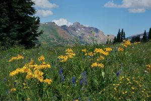 Hike along brightly colored wildflowers.