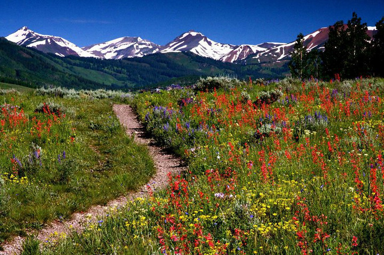 Colorado wildflowers along every trail