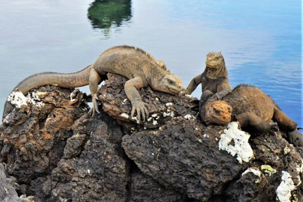 Ecuador - Galapagos Islands Multisport Tour