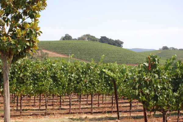 US - Sonoma County Wine Country Road Cycling