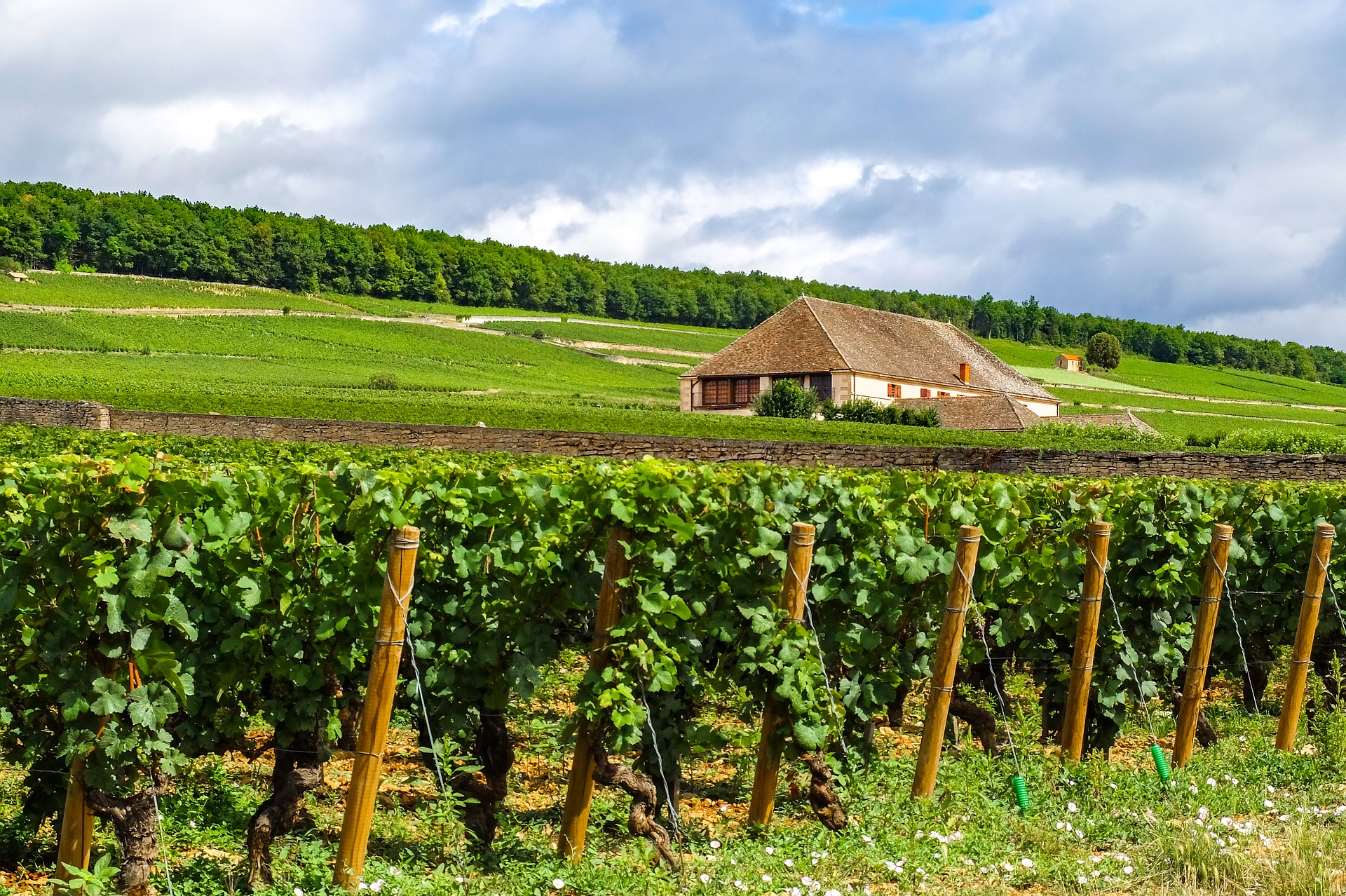 Vineyards galore on this Burgundy self guided bike tour.