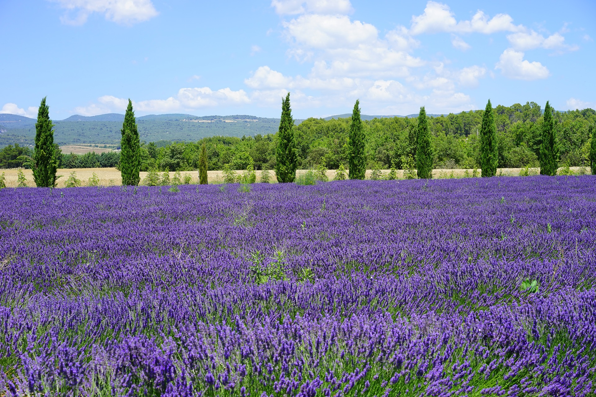 Lavender fields of Provence - a bucket list for many, can be enjoyed on this ebike tour.