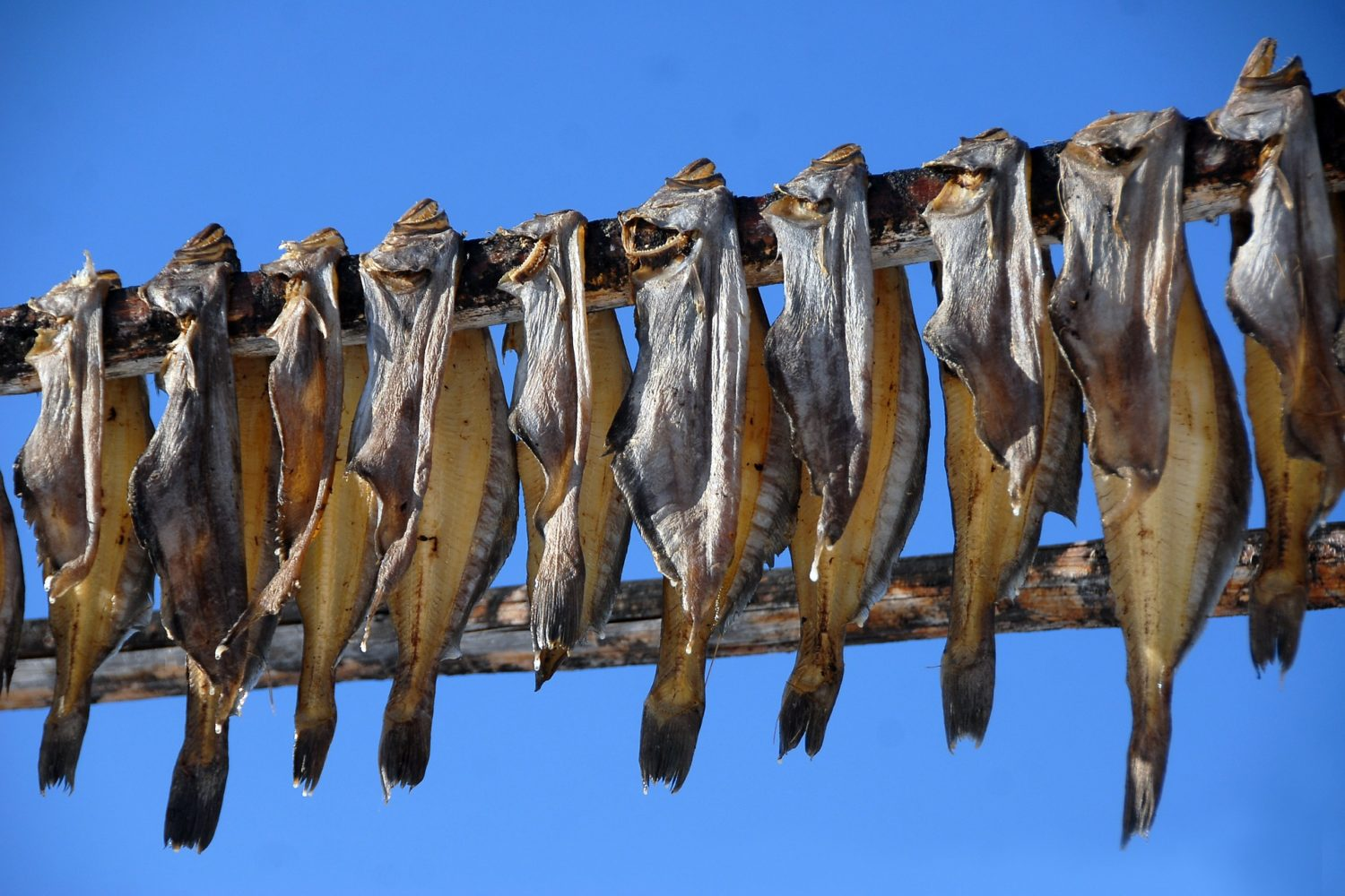 Dorr fish drying is a common site to see in Greenland.