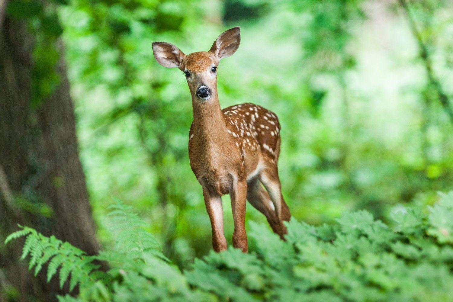It's not uncommon to see spotted fawns along the trail