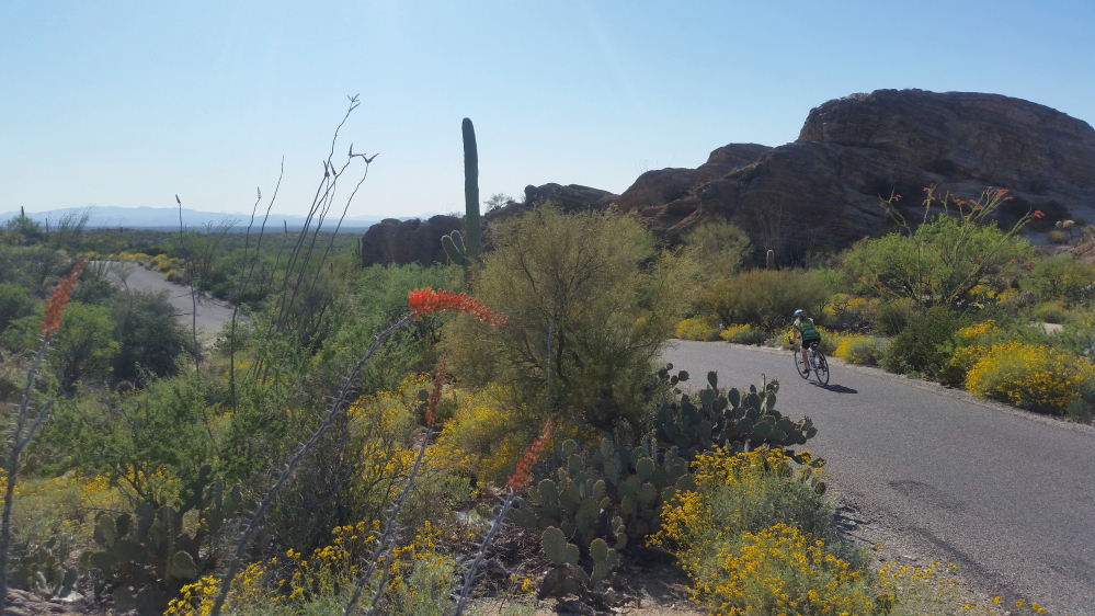 Cycling past beautiful desert landscapes