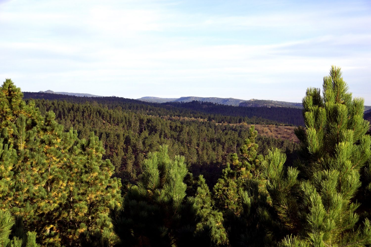 The Black Hills with endless forest views
