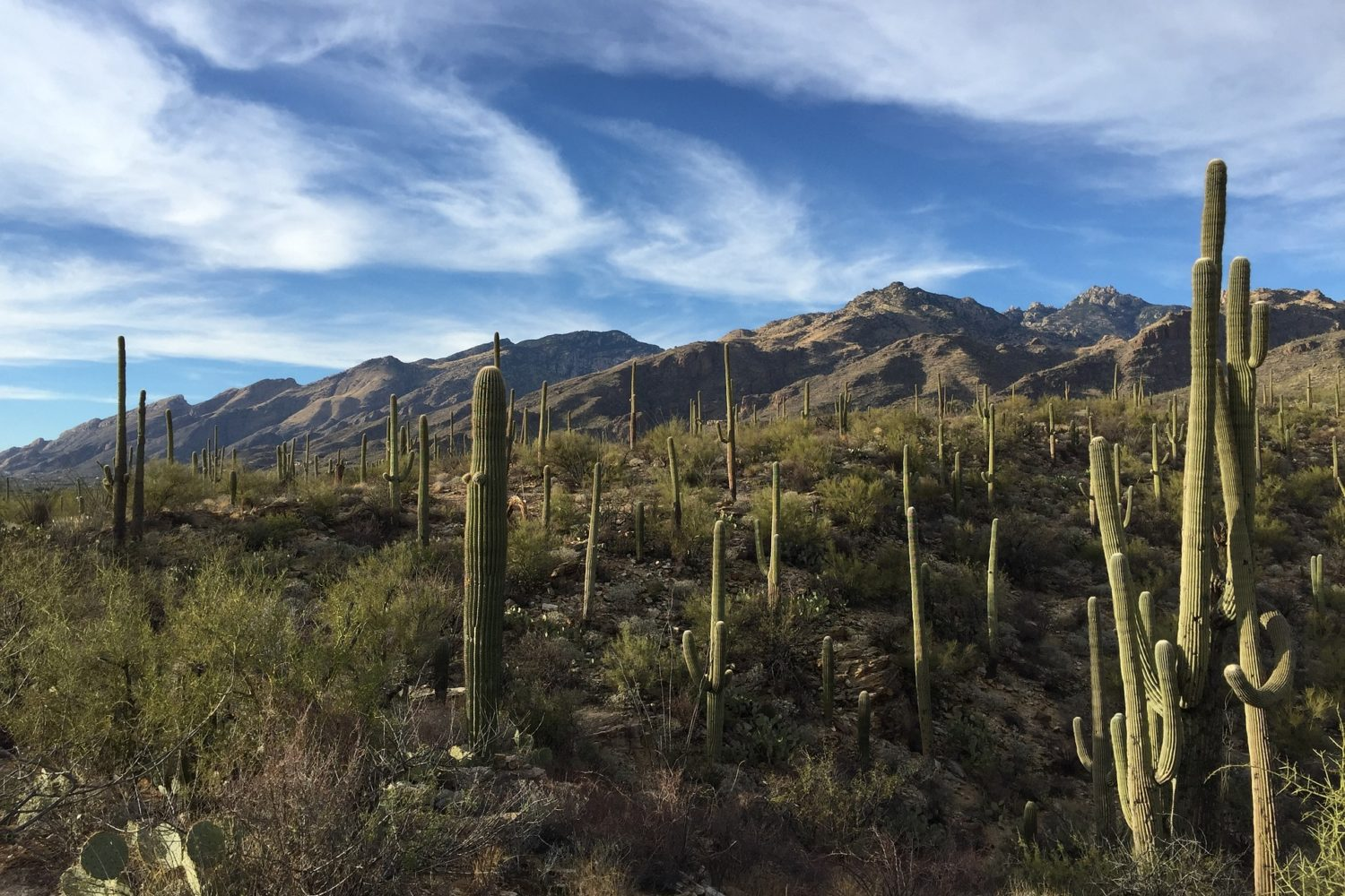 Towering saguaro greet you as your ride away from it all