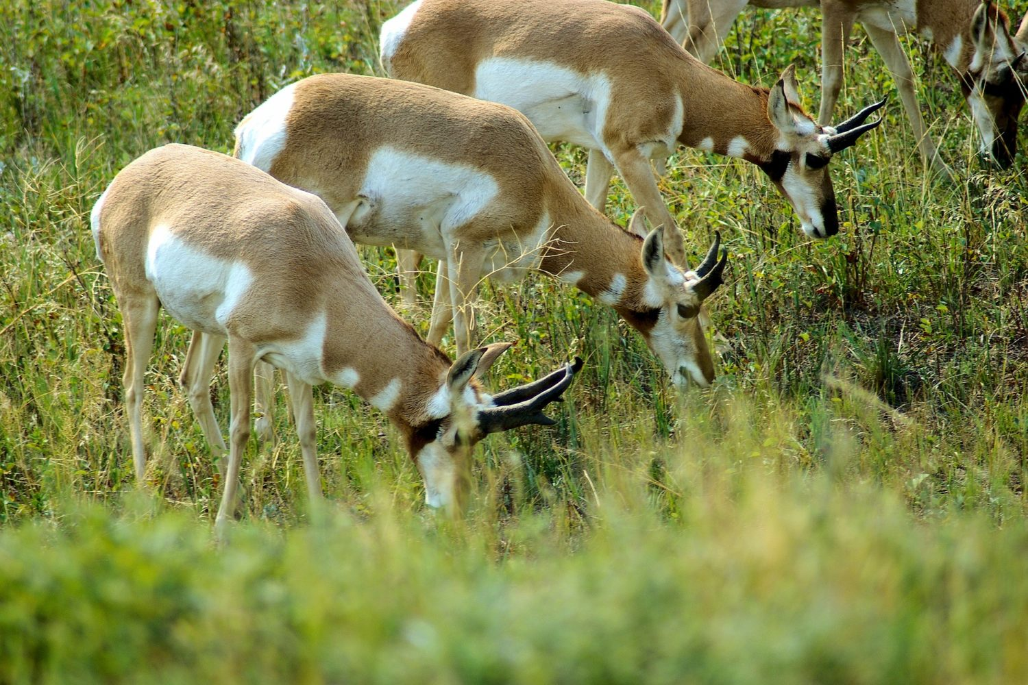 Wildlife such as antelope are often seen in this area